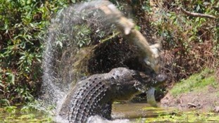 The deadly croc-on-croc battle was captured by a visitor