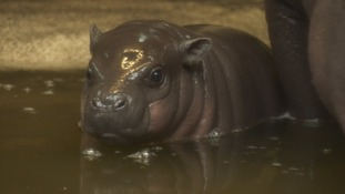 Keepers at the zoo are said to be devastated by the loss of the baby, who hadn't been named yet.