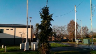 Is the 'Brinnington Twig' the worst Christmas tree in Britain?