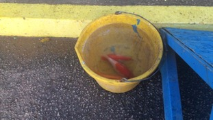 What a catch! Flooded Carlisle United find three koi carp in goalmouth during clean-up