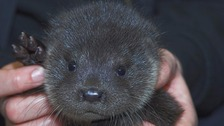 Buddy the otter