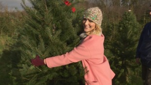 Kylie Pentelow has been out and about at a Christmas Tree farm, getting tips and hints on what you should be looking out for