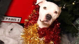 Dogs Trust leeds is hoping to give its canine residents their best Christmas yet