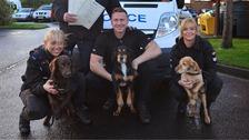 Retiring police dogs