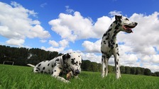 File image, dogs