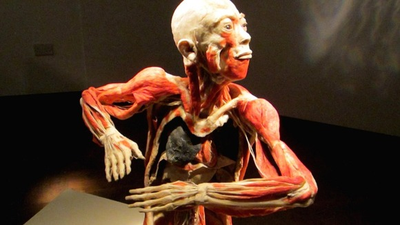 A model showing inner workings of the human body, part of Bodies Revealed
