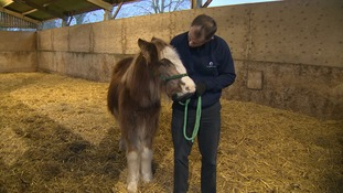 Rudolph with World Horse Welfare Chief Executive Roly Owers.