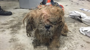 Dog rescued after being dumped on Christmas Eve
