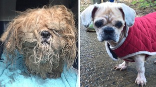 Dog found tied up and abandoned in the rain on Christmas Eve in an 'appalling' condition