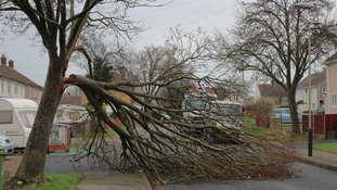 The wind broke this tree in Cheltenham in two