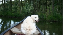 Tom the dog canoeing on the canal