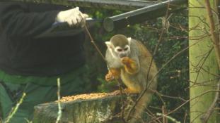 Monkey at Bristol Zoo