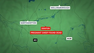 They were found in a field off Horton Road.