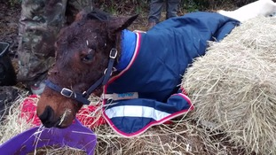 Christmas foal is fighting for his life