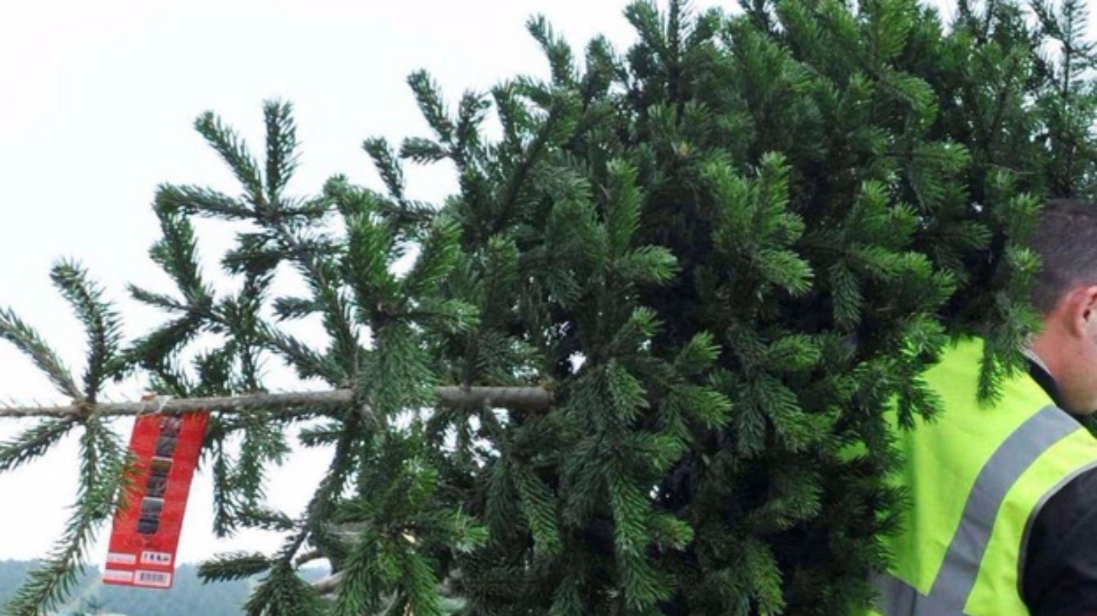 Christmas Tree Recycling Uttlesford : How to recycle christmas trees in each london borough