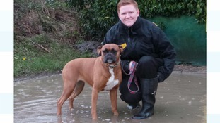Homeless dogs saved from the New Year floods