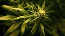 Police believe the drugs were herbal cannabis.