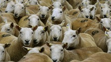 Police are warning that sheep worrying can have serious consequences.
