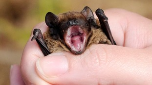 Search for bats around the East Midlands