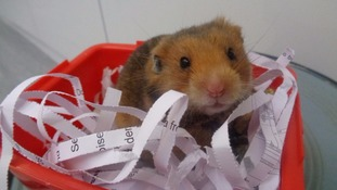 One of the fourteen hamsters rescued