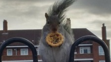 A squirrel munches on a mince pie