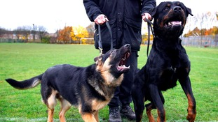 Police dog handler Joe Flood stands alongside German Shepherd police dog and Rottweiler