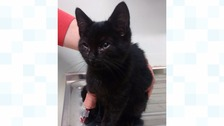 The 10-week-old black male kitten was found by a member of the public at 1.30am on Friday morning next to an industrial bin.