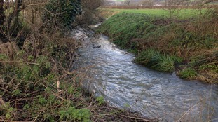The Whitelake river
