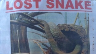 Hoax posters lead to fears of killer snake at London's King's Cross Station