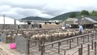 Abergavenny Livestock Market