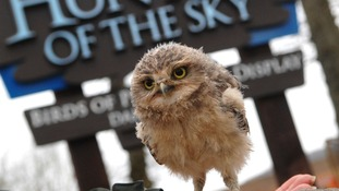 Owlet in front of Hunters of the Sky sign