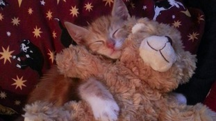 Ginger Tom Neil cuddles up with his favourite teddy bear