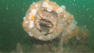The U-boat now provides a home for various sea creatures.