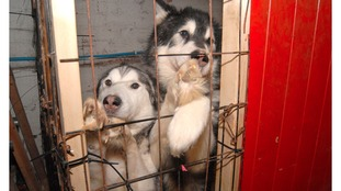 The animals were found in cages in the basement