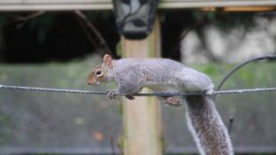 Simon's Blog - Britain's Got Talented Animals