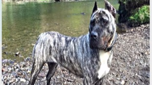Troya was taken from home in Stockport on Christmas Eve.