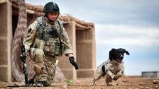 L/Cpl Liam Tasker, with his Military Working Dog, Theo, training in Camp Bastion
