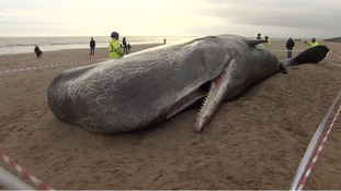 The whales were found on the beach near Skegness
