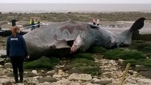 Experts are being called in to help remove a dead sperm whale from Hunstanton beach in Norfolk.