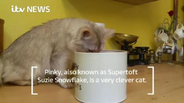 Clever_Cat_Web_PKG