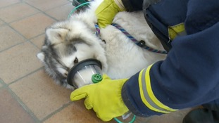 Fire engines to trial carrying life-saving equipment for pets