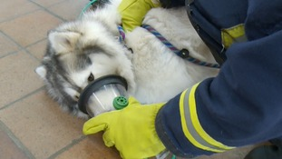 Five fire engines in Cambridgeshire are to carry life-saving oxygen masks for small animals as part of a trial.