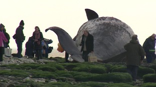 The public are being urged to stay away from a dead sperm whale on Hunstanton beach.