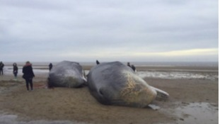 Three whales were discovered over the weekend.