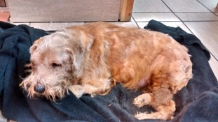 Dumped dog had 'every bone broken' in campaign of abuse by his owners