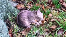 The squirrel was spotted in a park in Dunstable back in November.