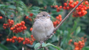 Simon's Blog - It's Big Garden Birdwatch Time Again