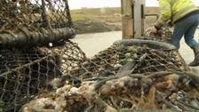 Sustainable fishing makes 25% profit for Lyme fishermen