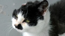 Cat left with half her head after tumour op