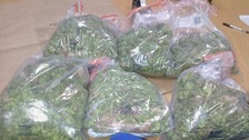 £25k worth of cannabis found at Sussex address